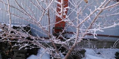 И без снега красивой бывает зима...