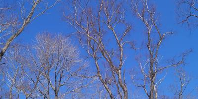 Солнечный февраль. Приморье