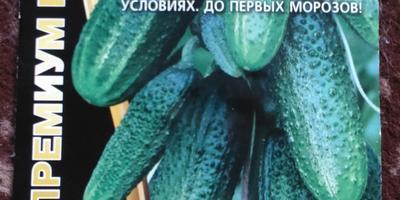 Поделитесь отзывами об огурцах сорта Сибирская гирлянда