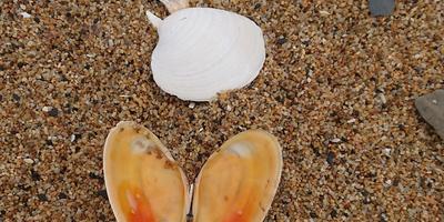 Мои морские бабочки...