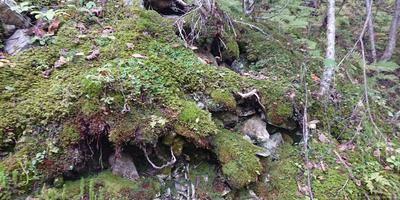 Неброская красота грибного царства