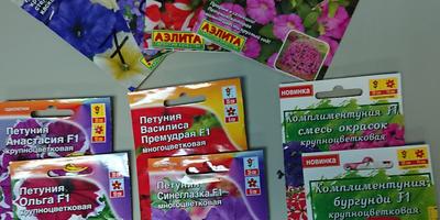 Петунии от Аэлиты во Владивостоке. Аналитический отчёт. Комплексный