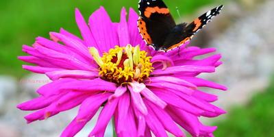 Бабочка в объективе, или Фототерапия