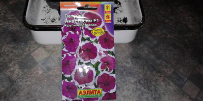 Петуния Анастасия F1. 1 этап. Посев