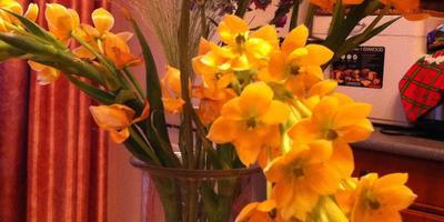 Как называются желтые цветы?