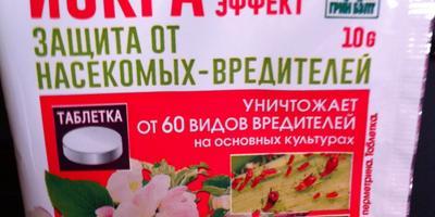 Тестирование препарата ИСКРА Двойной Эффект. Обработка роз
