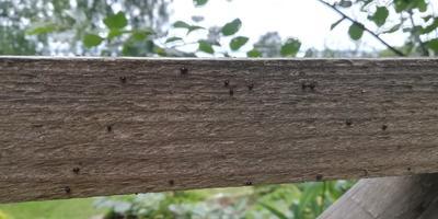 Что за насекомое? Нужно ли с ними бороться?