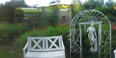 Люблю свой сад и огород в лучах заката.