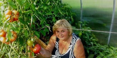 «Яблоко любви» - так говорят французы…  Мой урожай 2016 года, глава 3