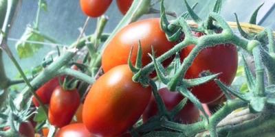 Хочешь чудо-урожай? Ты теплицу покупай!  Поливай, поли, сажай! Урожаи получай!