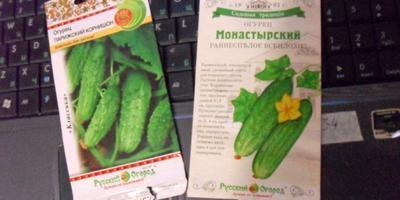 Приз от Русского Огорода в действии, или Урожайный огурец Монастырский