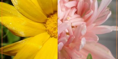 Помогите определиться, а какие цветы можно назвать осенними?