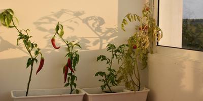 Домашнее задание №7: мой домашний огород