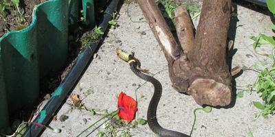 Лягушки и другие жители моего участка