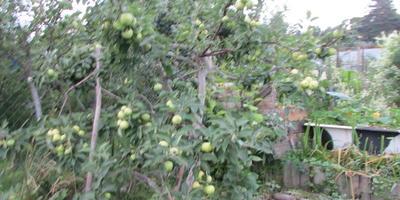 Люся: яблочный уксус