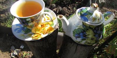 Курильский чай - здоровье в каждом глотке