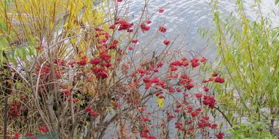 Осенний участок ещё живёт ярко