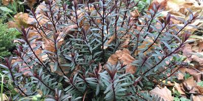 Помогите определить название растения и узнать, как подготовить это растение к зиме