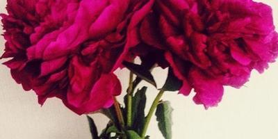 Что за цветы на фото?