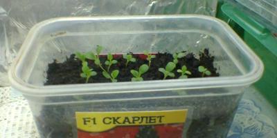 Мое тестирование семян различных фирм