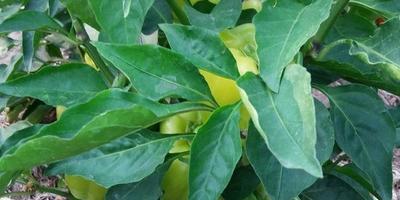 Правильное использование мульчи для увеличения урожая