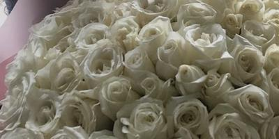 Можно ли в зимнее время в теплице выращивать розы на продажу? (Башкортостан)