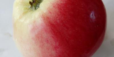 Подскажите сорт яблони