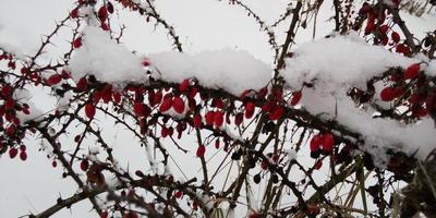 Снега мало... Жаль