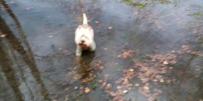 Апрельский потоп