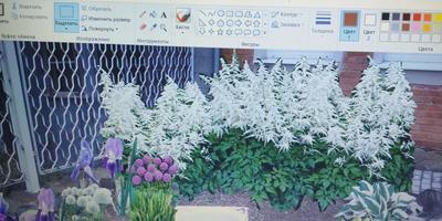 Как правильно организовать цветники в палисаднике?
