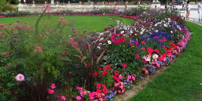 Много цветов, хороших и разных