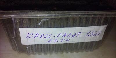 Кресс-салат Витаминчик. Тест на всхожесть (от весны до осени)