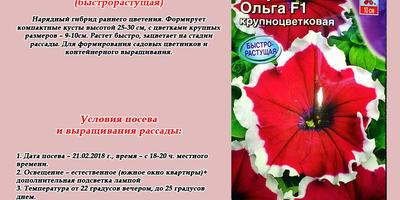 Петуния Ольга F1. Итоги