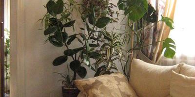 Зеленый оазис в доме