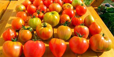 Дрожжевая подкормка для овощей