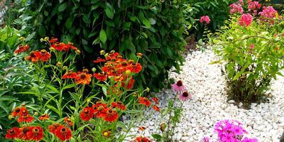 Приглашаю снова в гости в мой маленький цветущий сад...