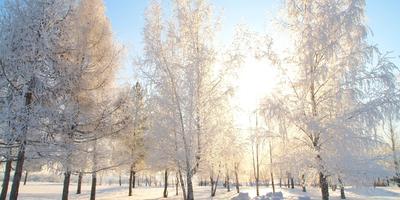 29 января  в Рязани: сказочный зимний подарок природы...