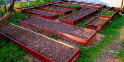 Мини-огород на тёплых грядках