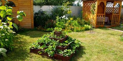 Клубничная пирамидка, или Вкусный подарок для любимого сада