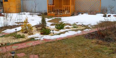 Хвойная клумба - радость в любимом саду круглый год!