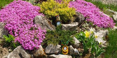 Майская цветотерапия - хороший способ побороть усталость и стресс