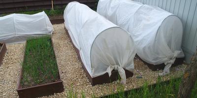 Борьба с травой в междурядьях с помощью щебня