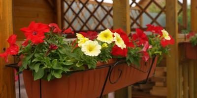 Летняя цветотерапия, или Отличное настроение - залог здорового образа жизни на даче!