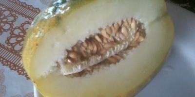 Какого сорта эта дыня?