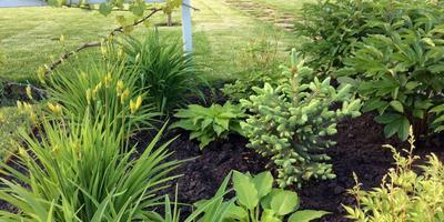 Мой сад. Красивоцветущие!!!
