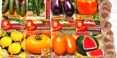Отчёт о получении семян на тестирование