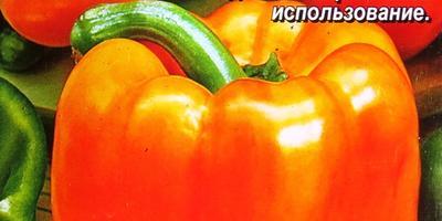 Перец сладкий «Оранжевый лев F1». Тест на всхожесть. Посев