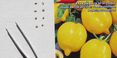 Томат «Цитрусовый сад». Тест на всхожесть. Посев