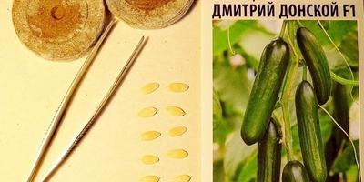 Огурец сорта «Дмитрий Донской».  Посев. Тест на всхожесть