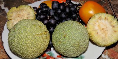 Как называется дерево и плоды, которые на нём растут?